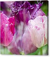 Layers Of Tulips II Canvas Print