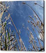 Laying In A Feild Looking Up Canvas Print