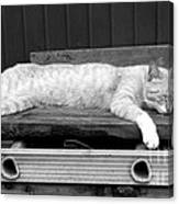 Lazy Cat Canvas Print