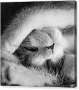 Lazy Day Bw Canvas Print