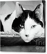 Le Cat Canvas Print