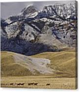 Lead Horse Canvas Print