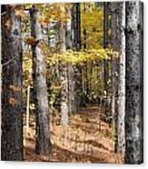 Leading To Autumn Canvas Print