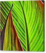 Leaf Abstract 4 Canvas Print