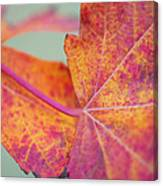 Leaf Abstract In Pink Canvas Print