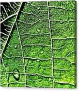 Leaf Abstract - Macro Photography Canvas Print