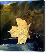 Leaf Afloat Canvas Print