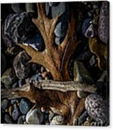 Leaf And Stones Canvas Print