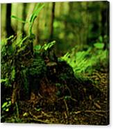 Leaf Bud Canvas Print