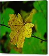 Leaf Caught On A Branch Canvas Print