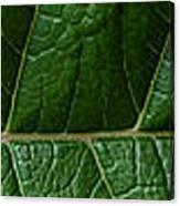 Leaf Close Up Canvas Print