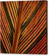 Cannas Plant Leaf Closeup Canvas Print