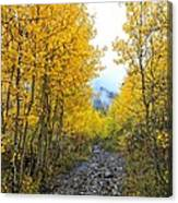 Leaf Covered Rocky Road Canvas Print