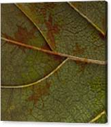 Leaf Design I Canvas Print