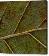 Leaf Design II Canvas Print