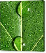 Leaf Dew Drop Number 10 Canvas Print