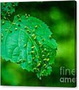 Leaf Gall Canvas Print