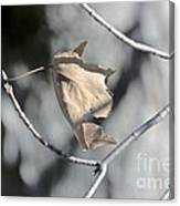 Leaf Harp Canvas Print