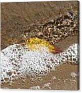 Leaf in Foamy Water Canvas Print