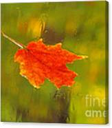 Leaf In Rain Canvas Print