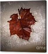 Leaf In Snow Canvas Print