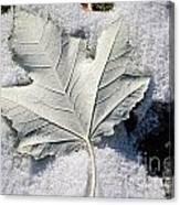 Leaf In Snow Canvas Print