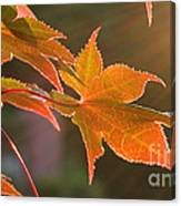 Leaf In The Sun Canvas Print