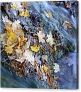 Leaf Island Canvas Print