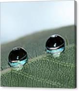 Leaf Jewels Canvas Print