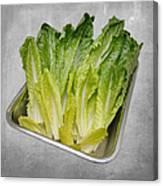 Leaf Lettuce Canvas Print