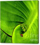 Leaf Life Canvas Print