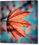 Leaf Of Light Canvas Print