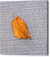 Leaf On Granite 1 Canvas Print