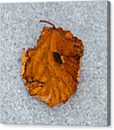 Leaf On Granite 11 - Square Canvas Print