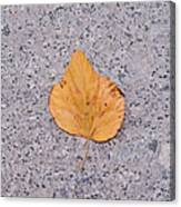 Leaf On Granite 2 - Square Canvas Print