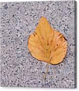 Leaf On Granite 2 Canvas Print