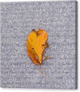 Leaf On Granite 3 - Square Canvas Print