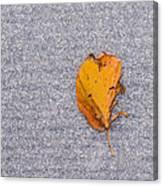 Leaf On Granite 3 Canvas Print