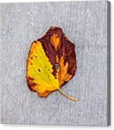 Leaf On Granite 5 - Square Canvas Print