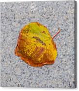 Leaf On Granite 6 - Square Canvas Print