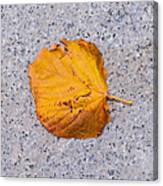 Leaf On Granite 7 - Square Canvas Print