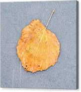 Leaf On Granite 9 - Square Canvas Print