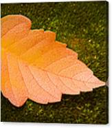 Leaf On Moss Canvas Print