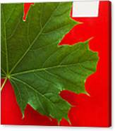 Leaf On Sign Canvas Print