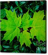Leaf Overlay Canvas Print