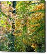 Leaf Path  Canvas Print