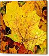 Leaf Portait 1 Canvas Print