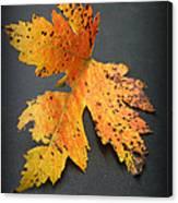 Leaf Portrait Canvas Print