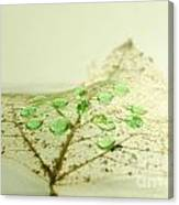 Leaf With Green Drops Canvas Print