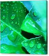 Leafish Canvas Print
